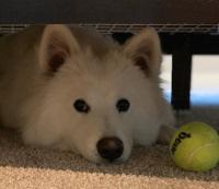 ベッドの下にペット